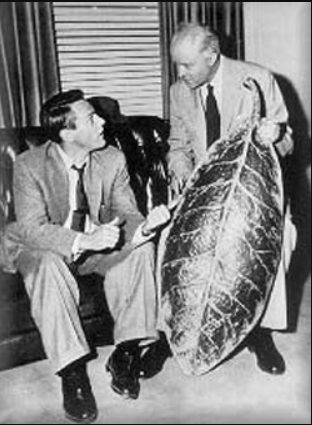 Picture of seedpod from the 1956 film adaptation